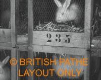 british rabbit farm.com